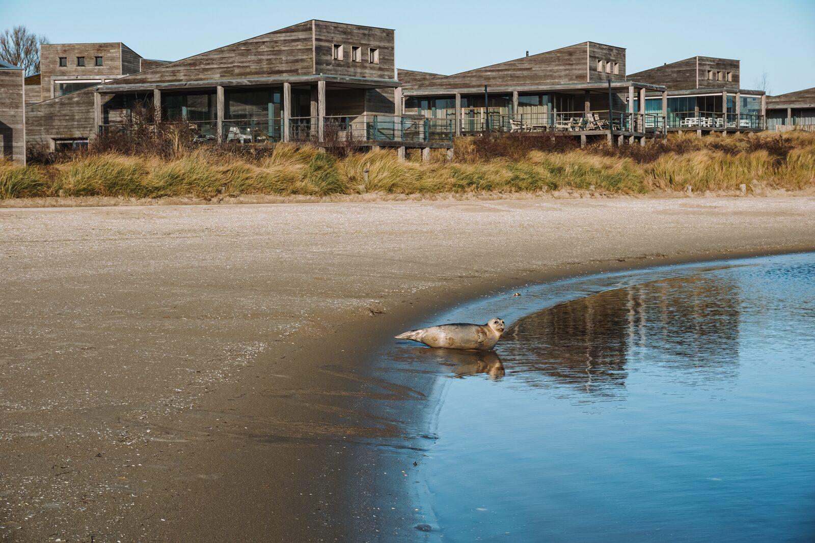 Zeehond strand Grevelingen   Reisverhaal van Daan