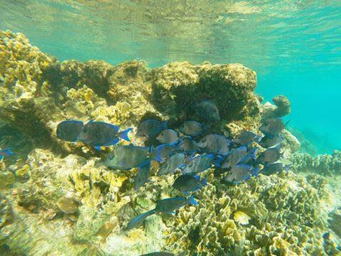 Le parc national marin de Bonaire