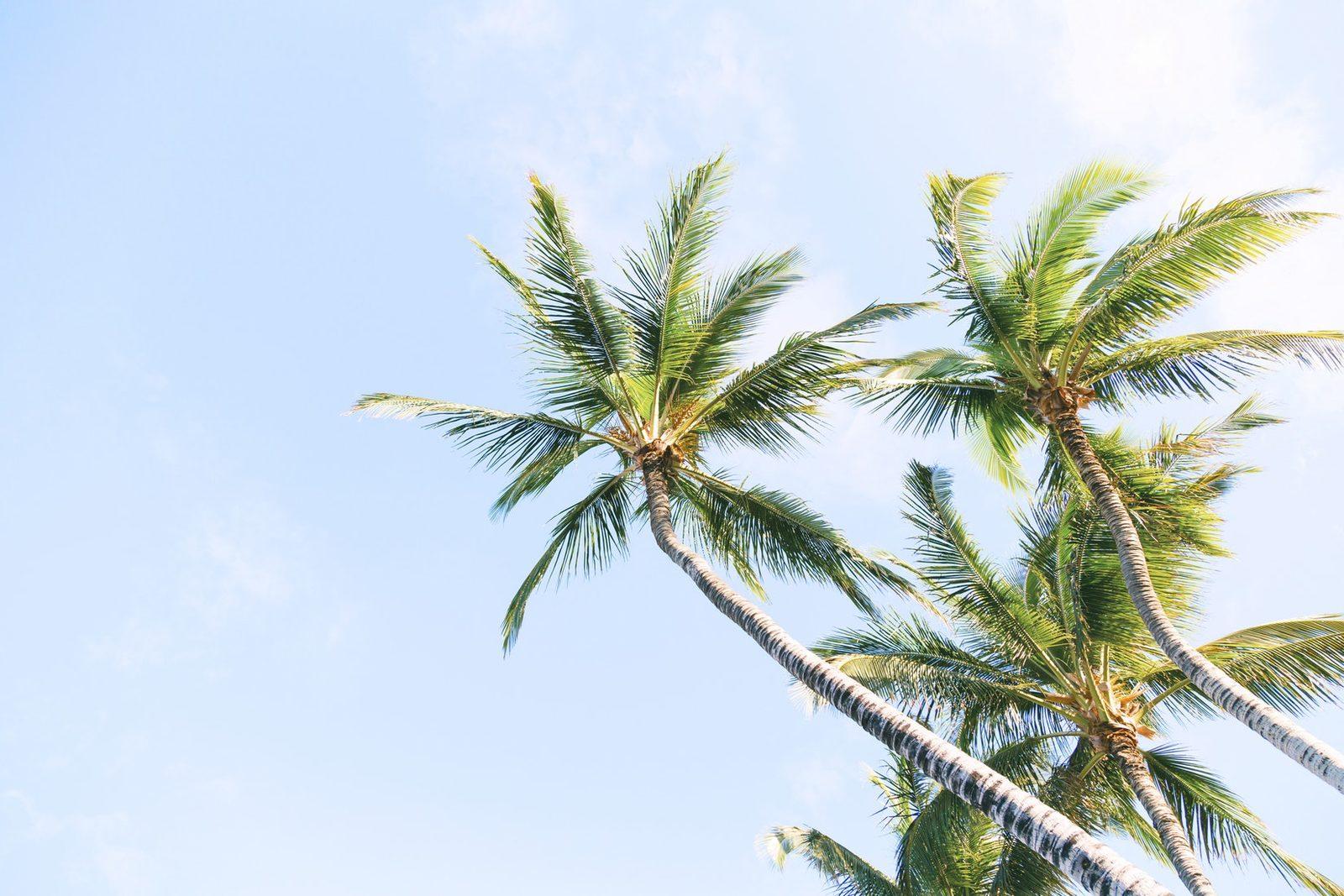 Se déplacer à Bonaire