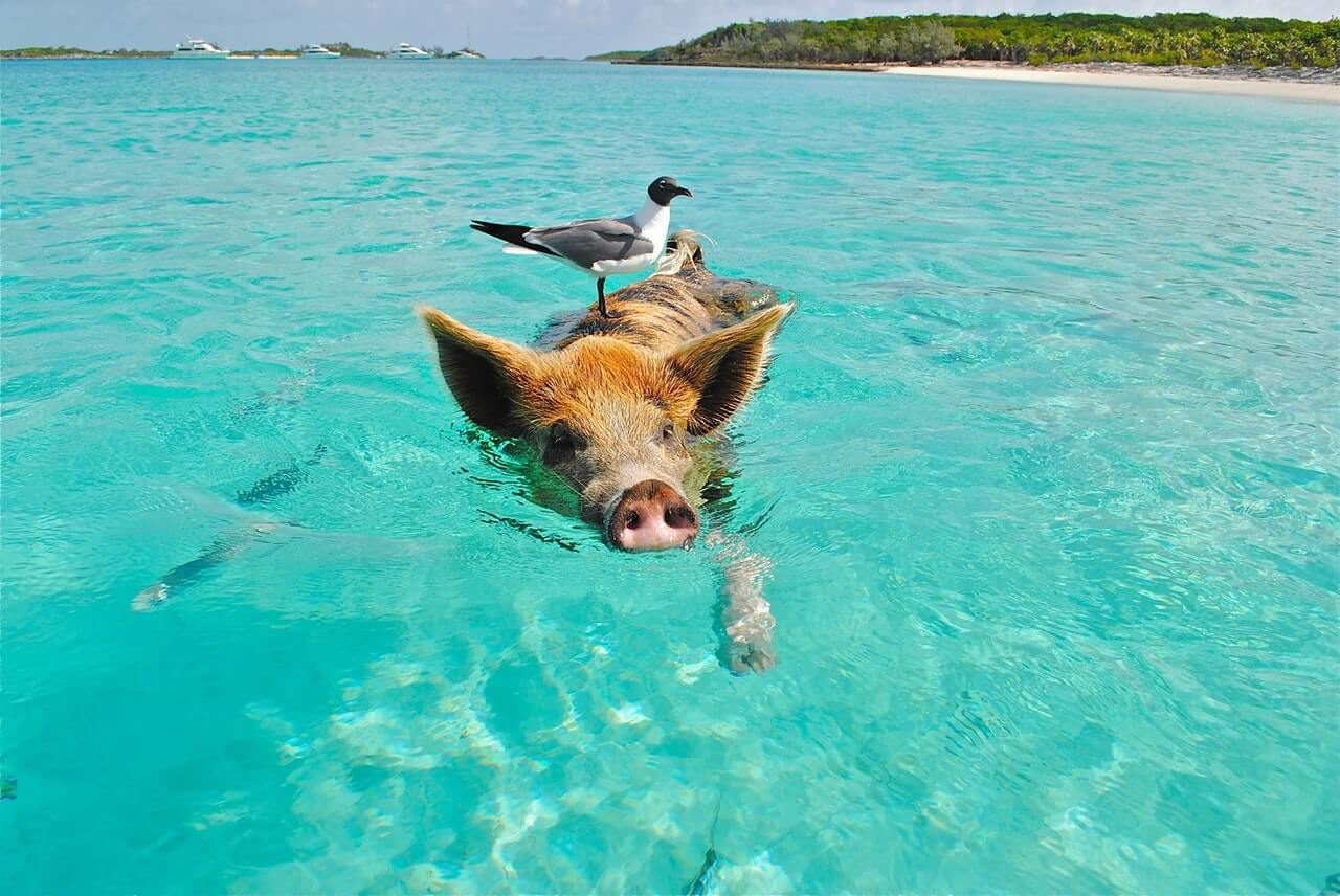 The animals on Bonaire are not only water animals or land animals. You will definitely will find these beautiful creatures on this island.