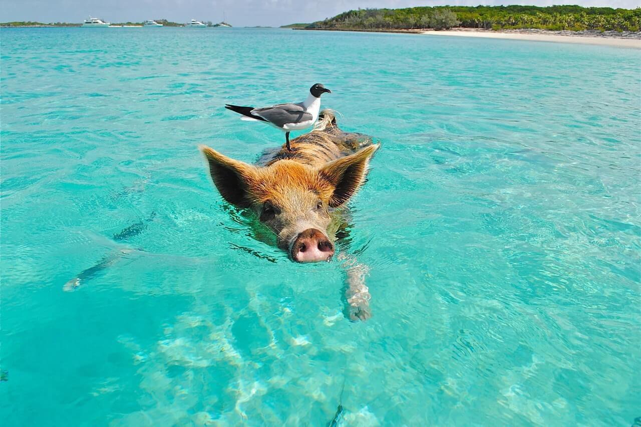 Dieren op Bonaire; van waterdieren tot landdieren. Houd je camera in de aanslag, want je vindt deze prachtige schepsels overal.