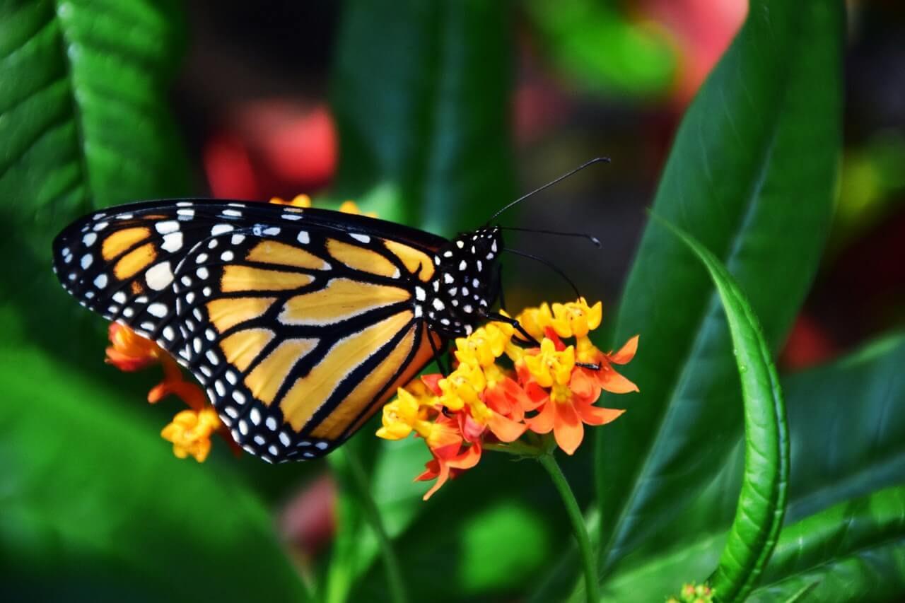 De dieren op Bonaire variëren enorm. U vindt niet alleen reptielen, maar ook veel insecten als vlinders. Lees meer over dieren op Bonaire.