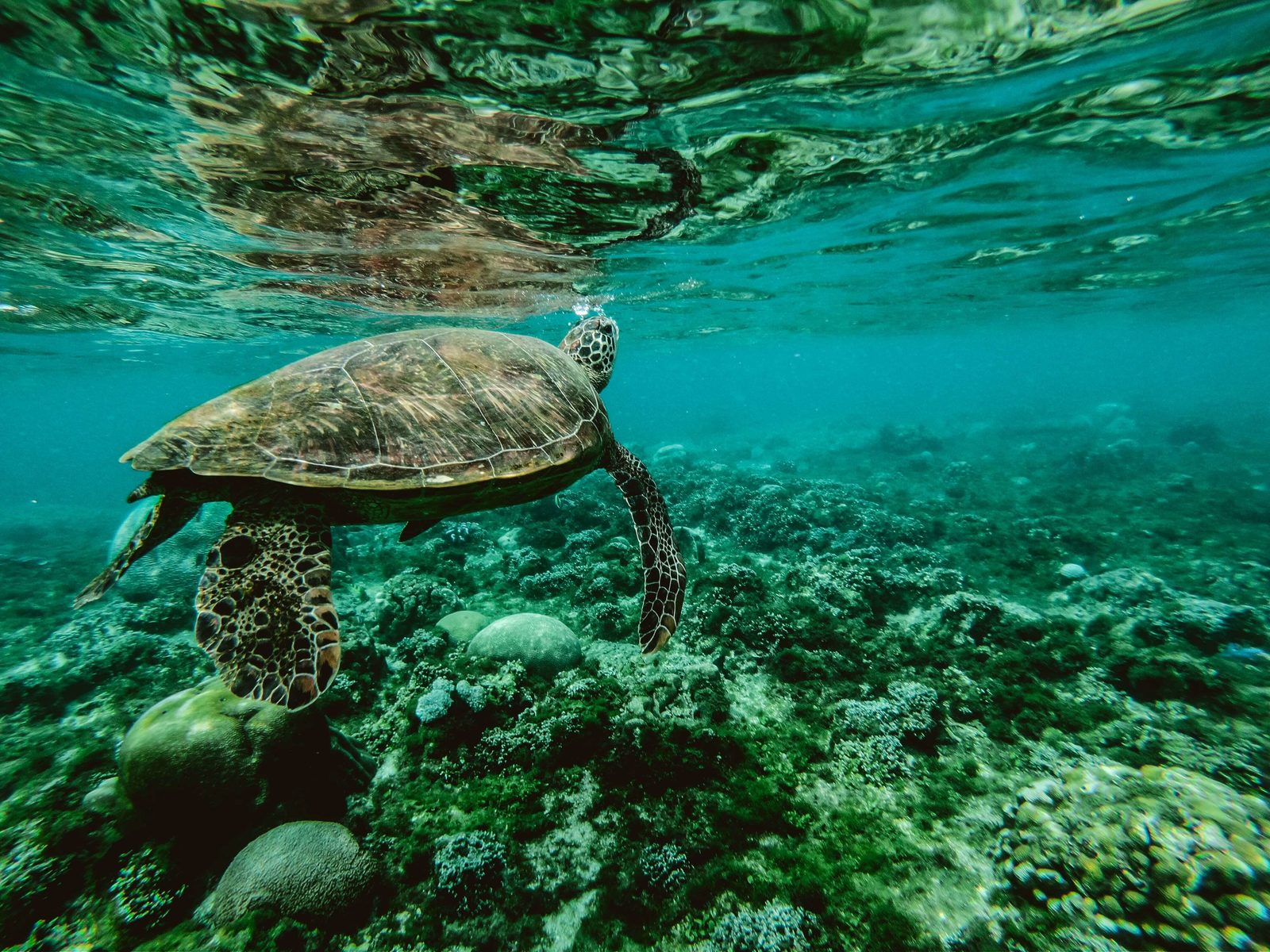 Dieren op Bonaire zijn niet alleen leuk om naar te kijken, ook om mee te zwemmen. Lees meer over de dieren op Bonaire, die je kunt tegenkomen.