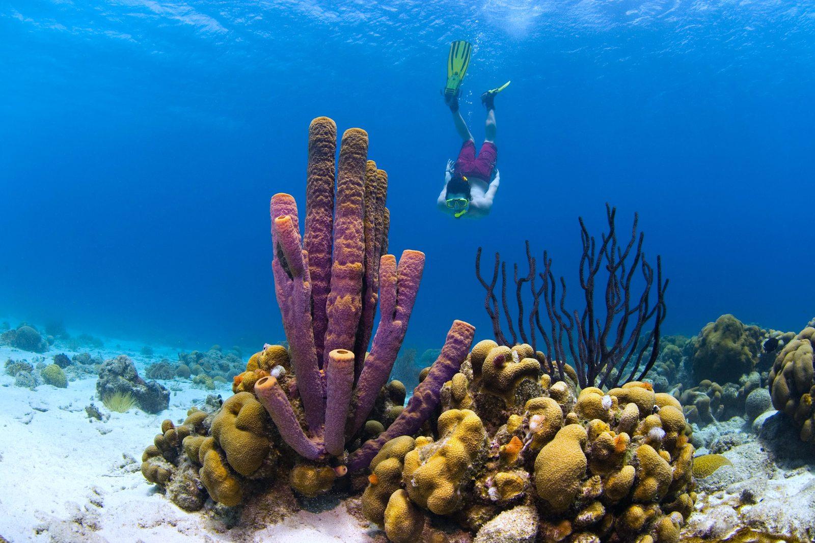 Duikvakantie Curaçao