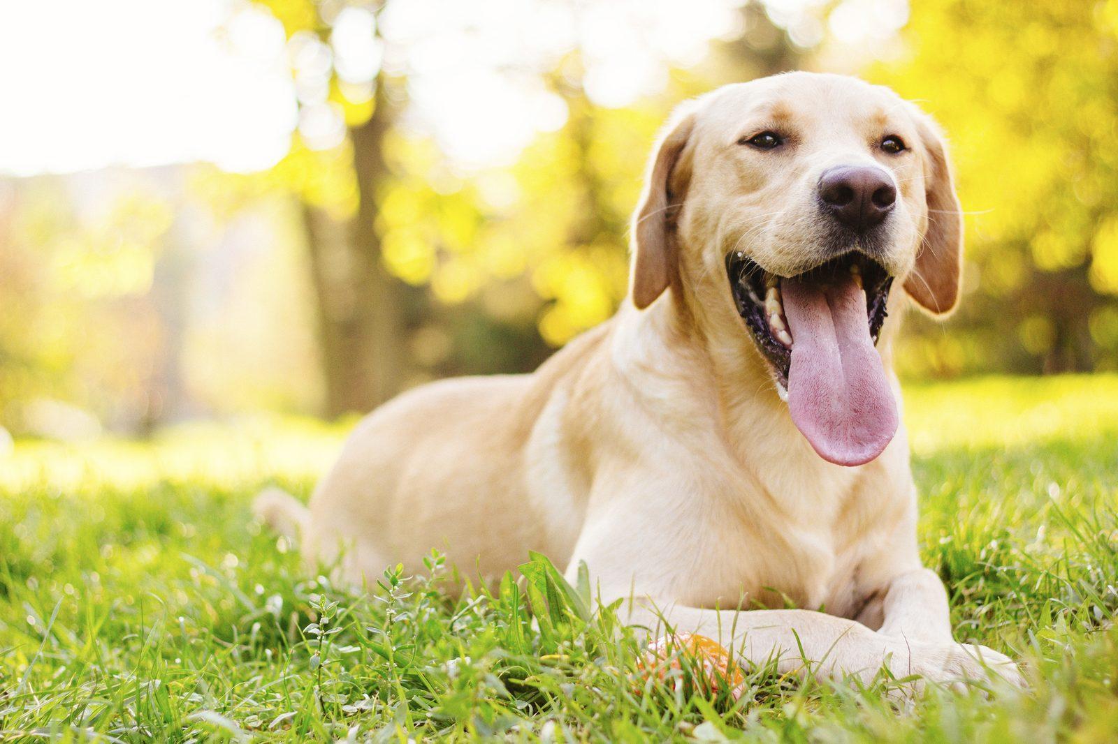 Ferienanlage Nordholland mit Hund