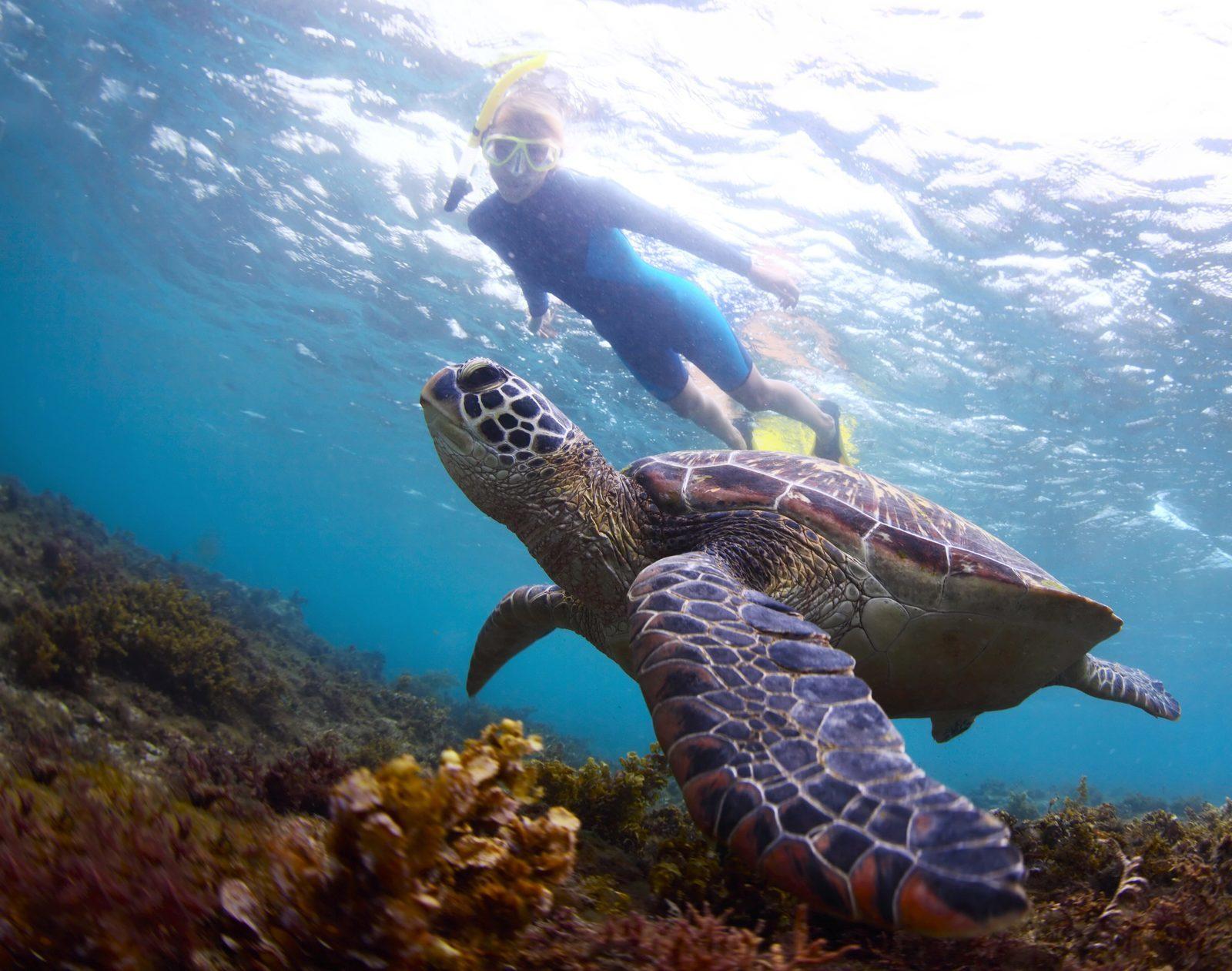 Activités sur l'île de Bonaire