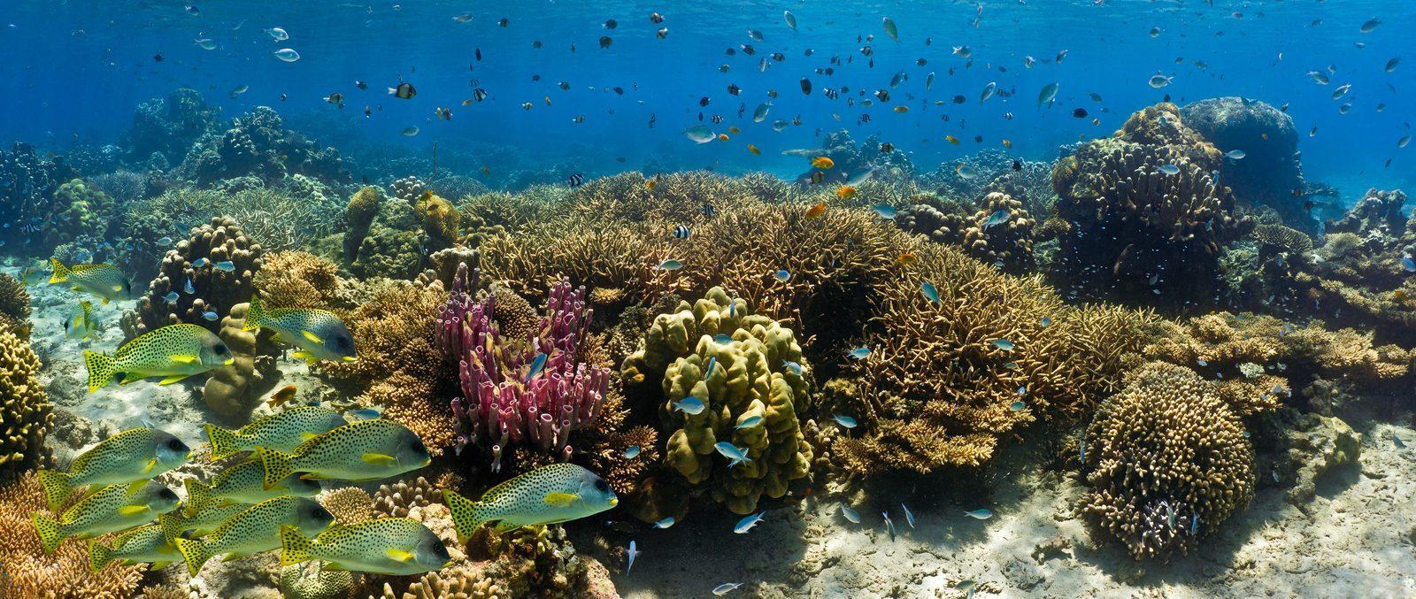Diving school Resort Bonaire