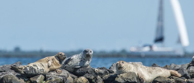 Zeehondenopvang A Seal | Stellendam