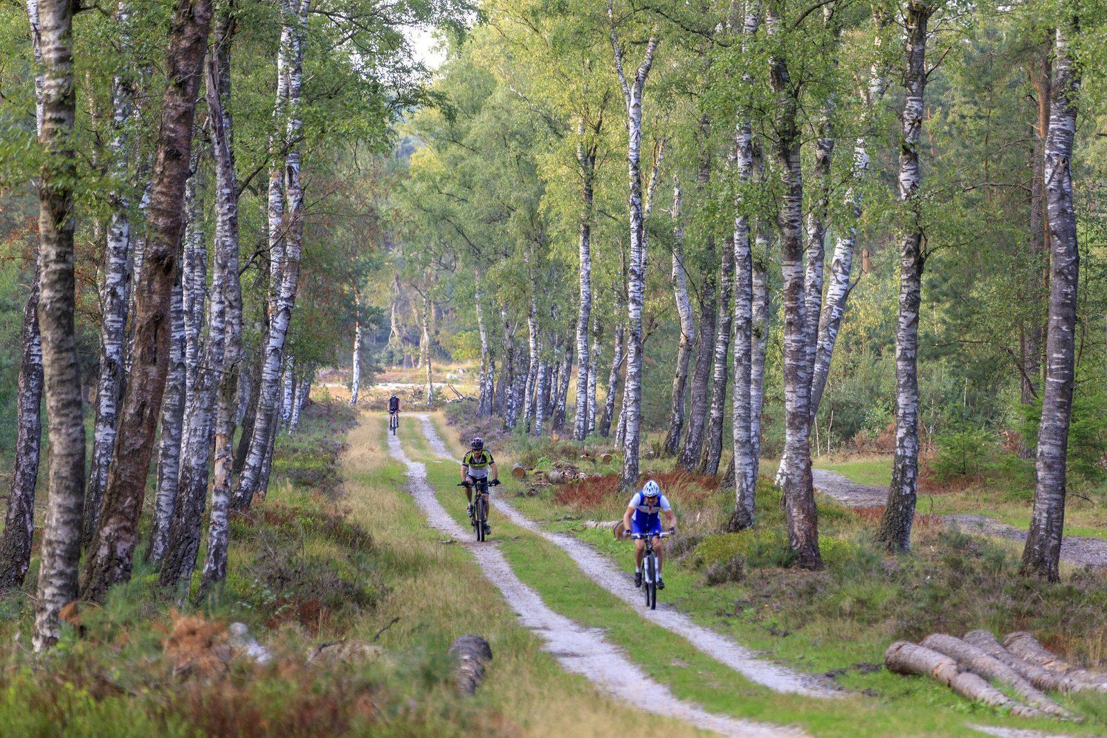 Nieuwe mountainbikeroutes op de Veluwe
