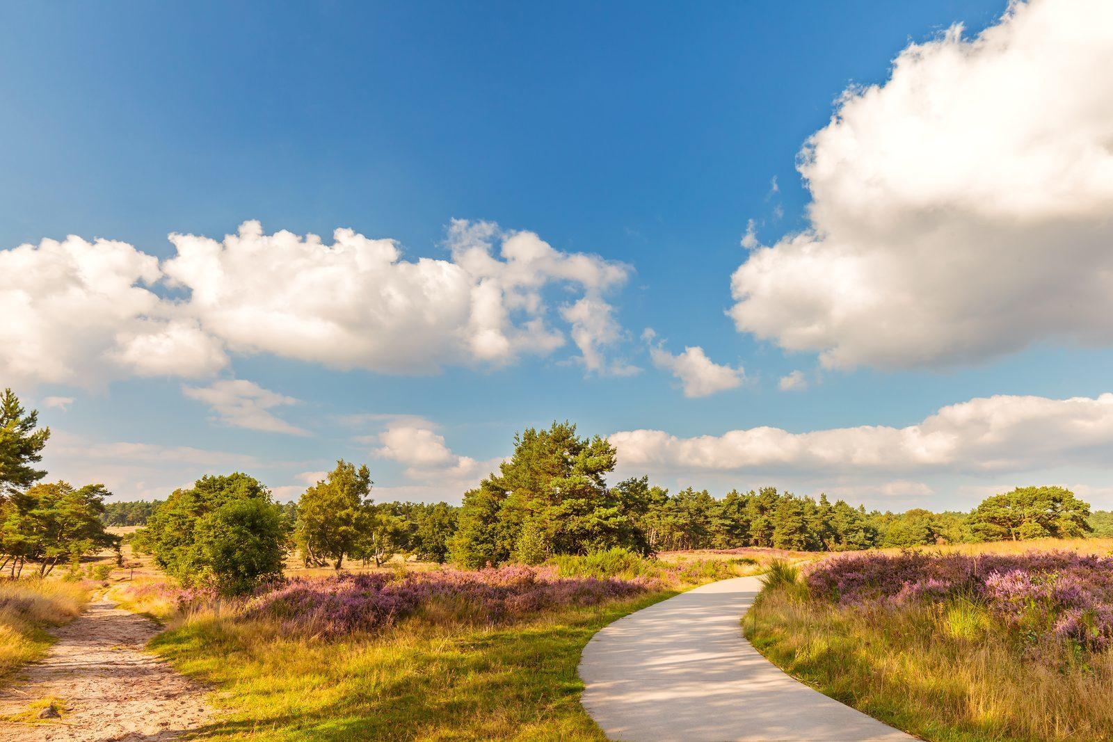 Dit zijn de 10 allermooiste wandelroutes op de Veluwe