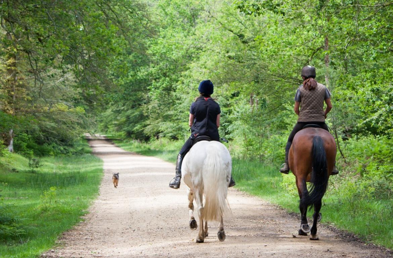 Paardrijden in de Vendee