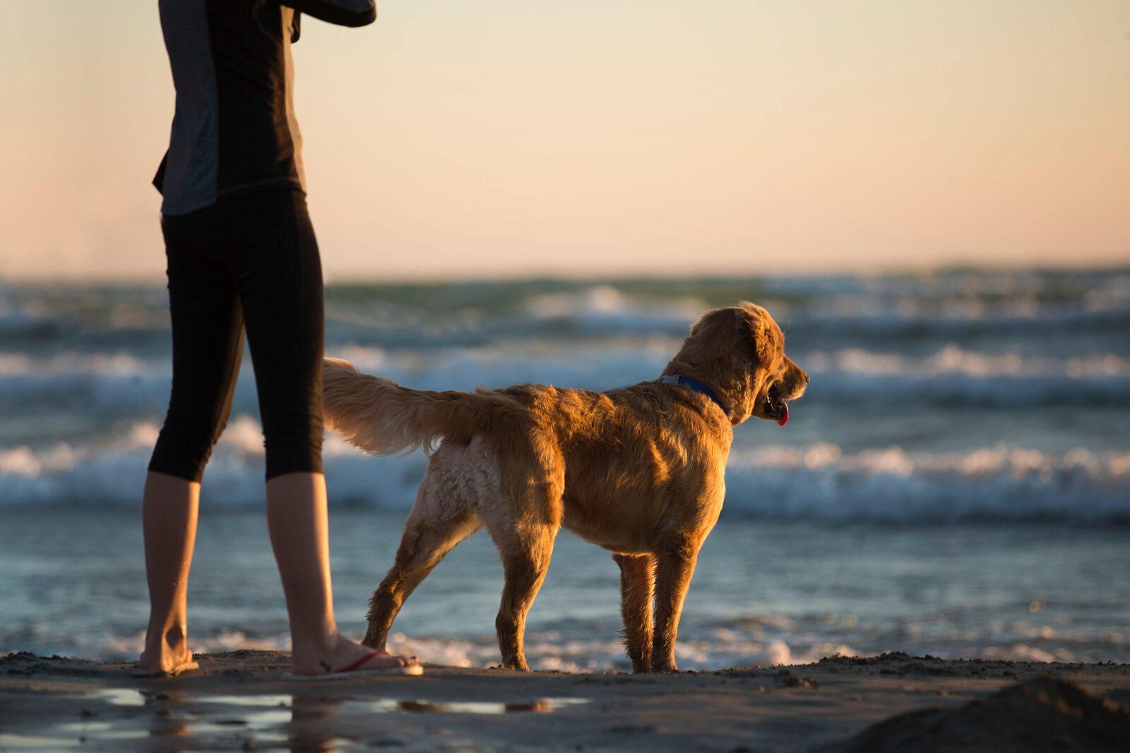 vacances avec chien