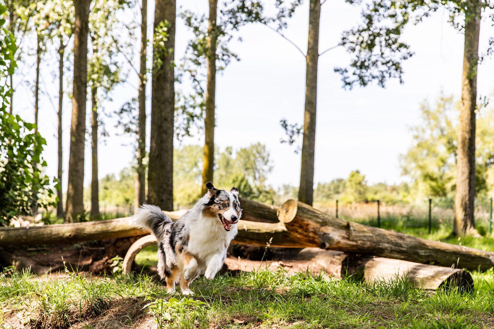 Vakantiehuisje Zuid-Limburg met hond
