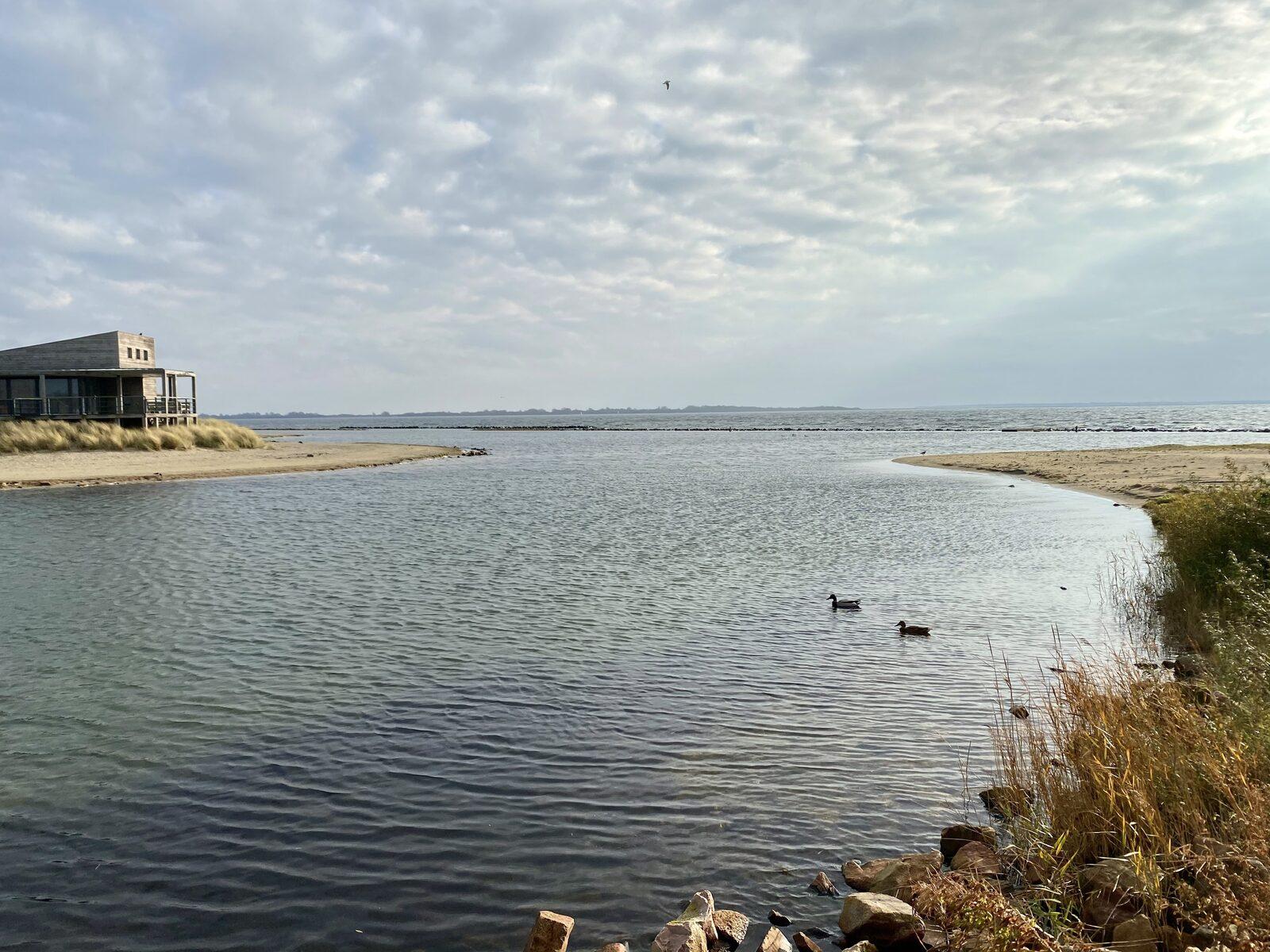 Muriel   ''Wandelen over het strand met ons hondje...''